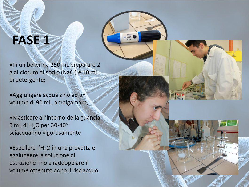 FASE 1 In un beker da 250 mL preparare 2 g di cloruro di sodio (NaCl) e 10 mL di detergente;