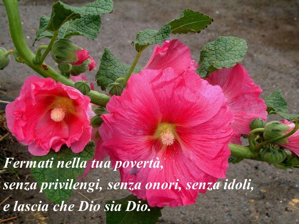 Fermati nella tua povertà, senza privilengi, senza onori, senza idoli,
