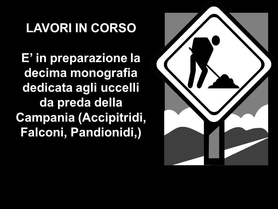 LAVORI IN CORSO E' in preparazione la decima monografia dedicata agli uccelli da preda della Campania (Accipitridi, Falconi, Pandionidi,)