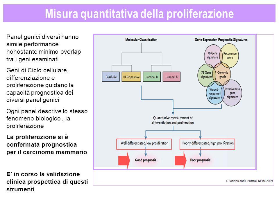 Misura quantitativa della proliferazione