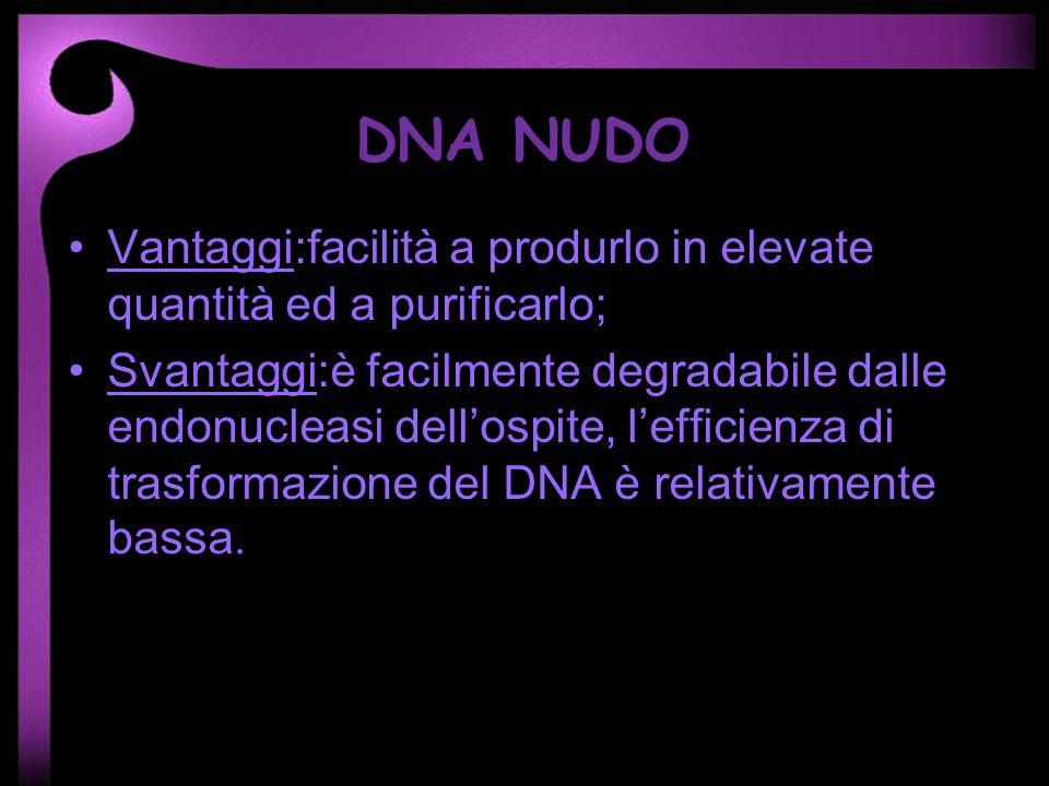 DNA NUDO Vantaggi:facilità a produrlo in elevate quantità ed a purificarlo;