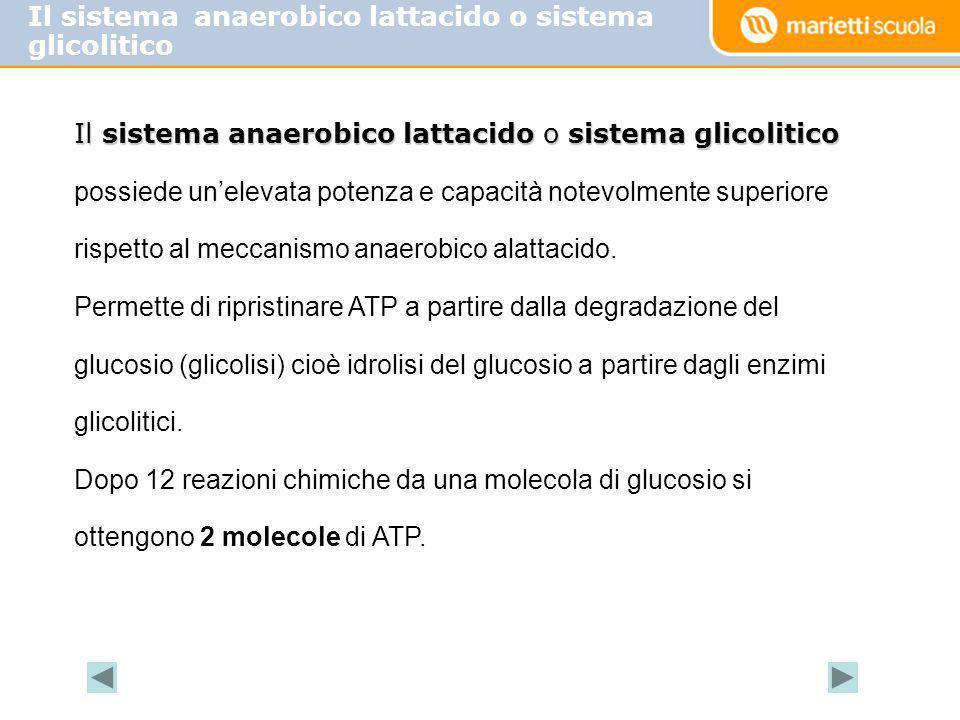 Il sistema anaerobico lattacido o sistema glicolitico