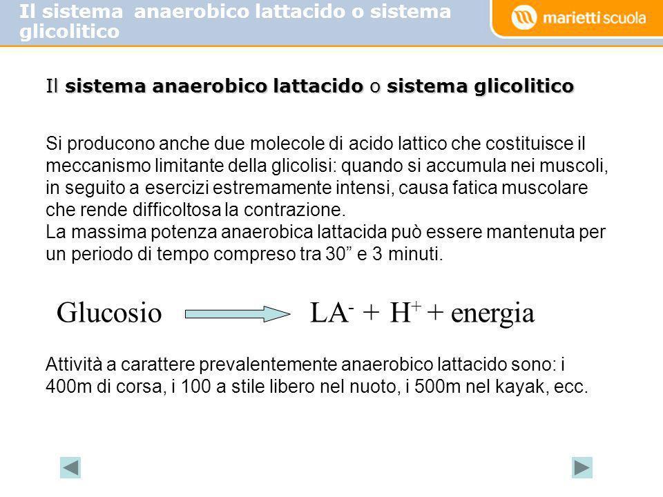 Glucosio LA- + H+ + energia