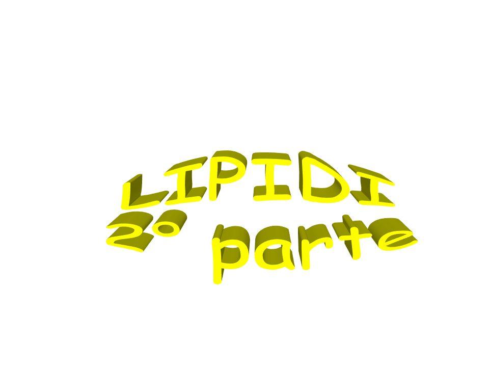 LIPIDI 2° parte