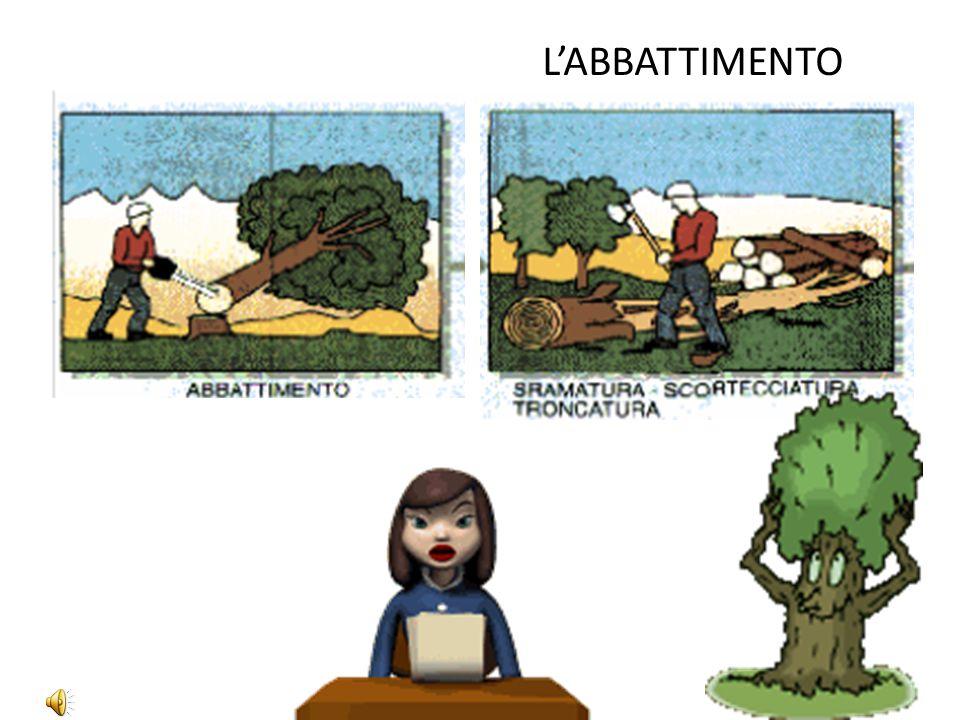 L'ABBATTIMENTO