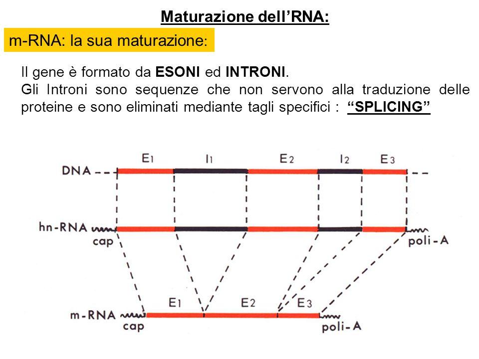 Maturazione dell'RNA: