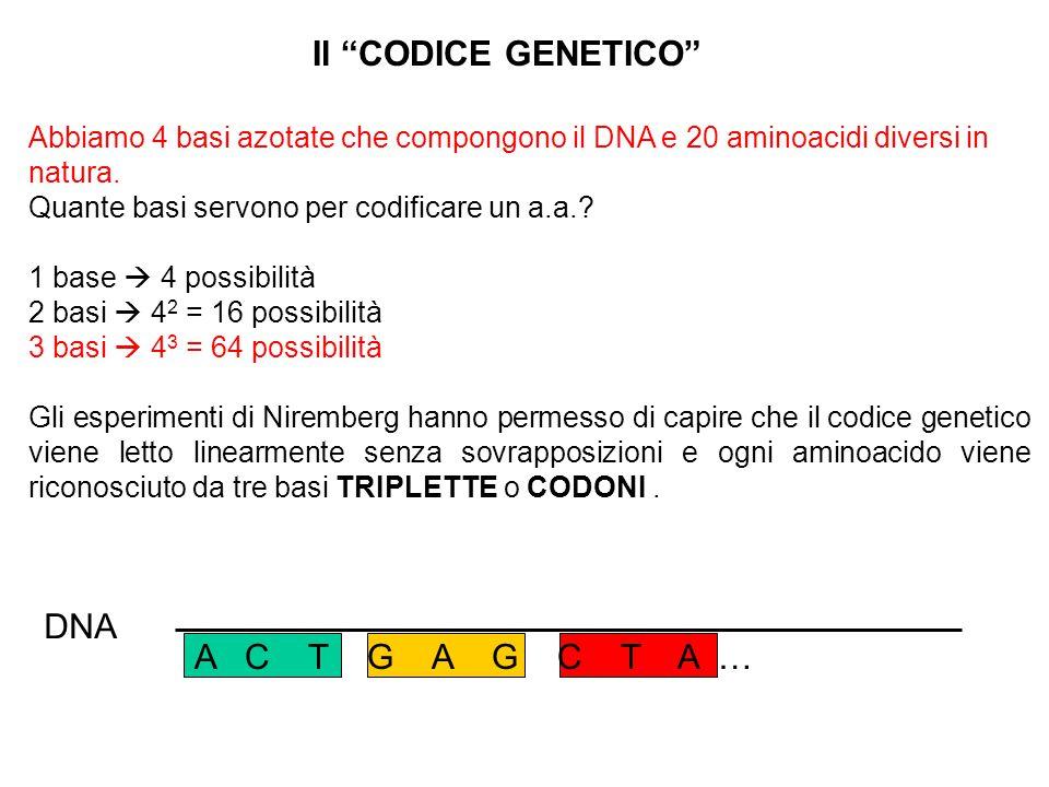 Il CODICE GENETICO DNA A C T G A G C T A …