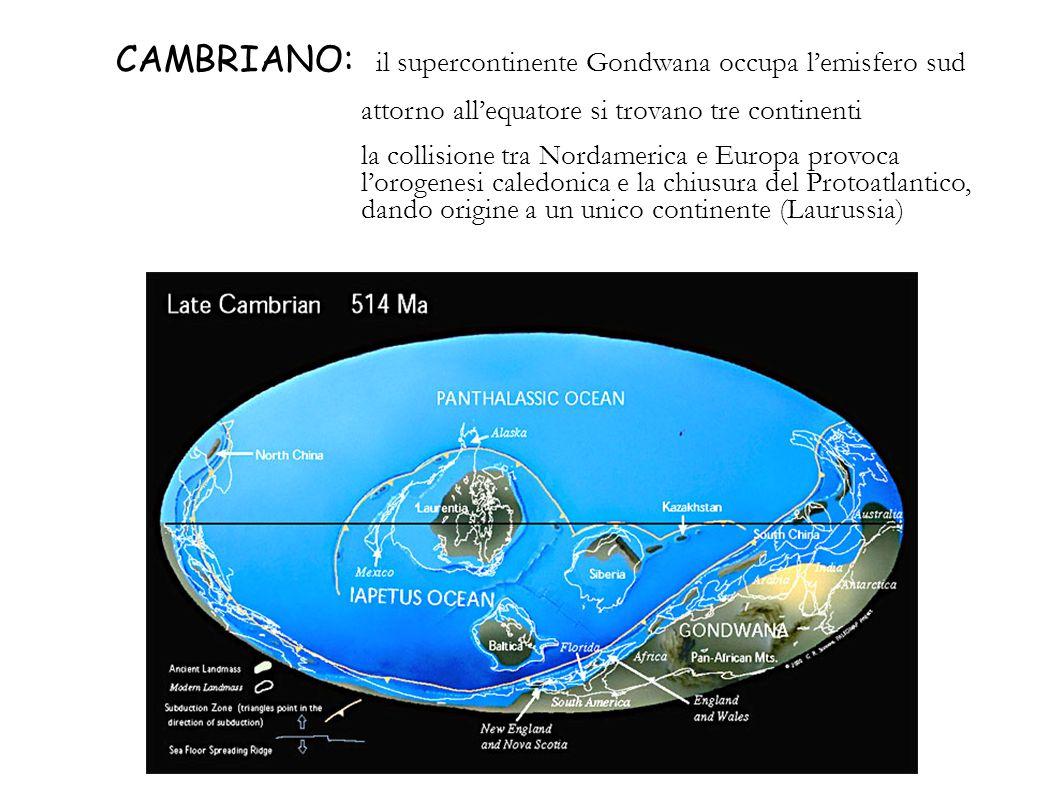 CAMBRIANO: il supercontinente Gondwana occupa l'emisfero sud