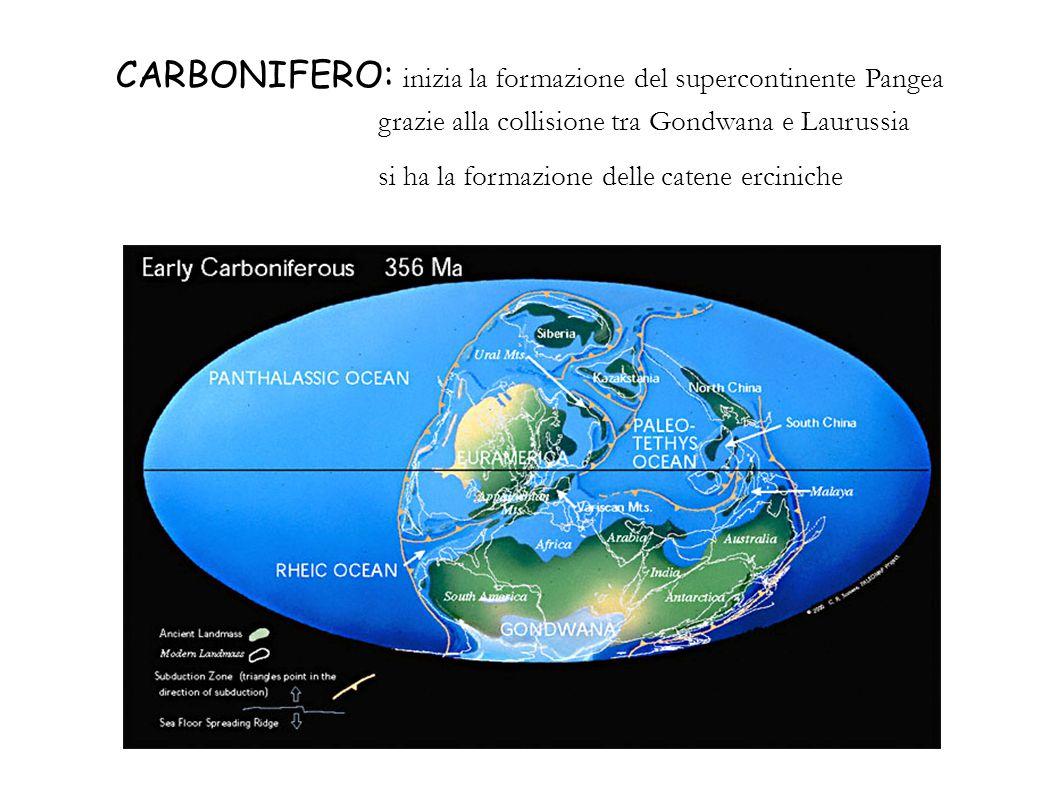 CARBONIFERO: inizia la formazione del supercontinente Pangea grazie alla collisione tra Gondwana e Laurussia