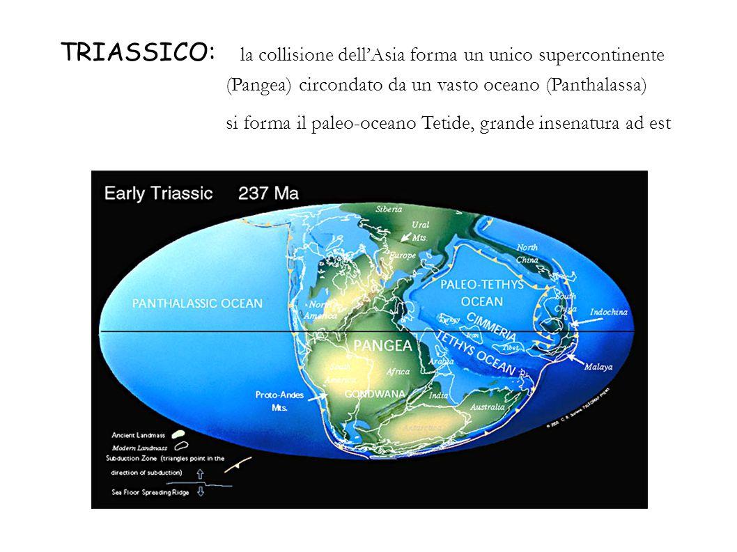 TRIASSICO: la collisione dell'Asia forma un unico supercontinente (Pangea) circondato da un vasto oceano (Panthalassa)