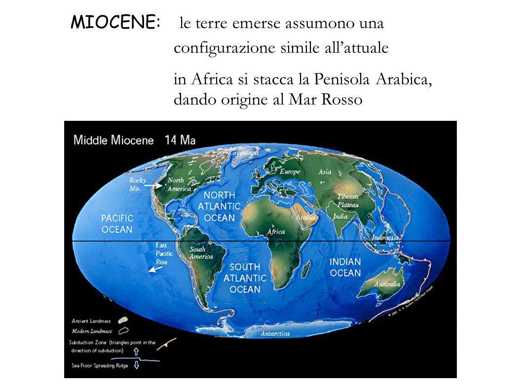 MIOCENE: le terre emerse assumono una configurazione simile all'attuale