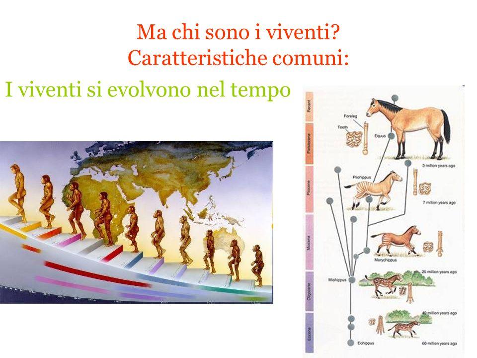 Ma chi sono i viventi Caratteristiche comuni: