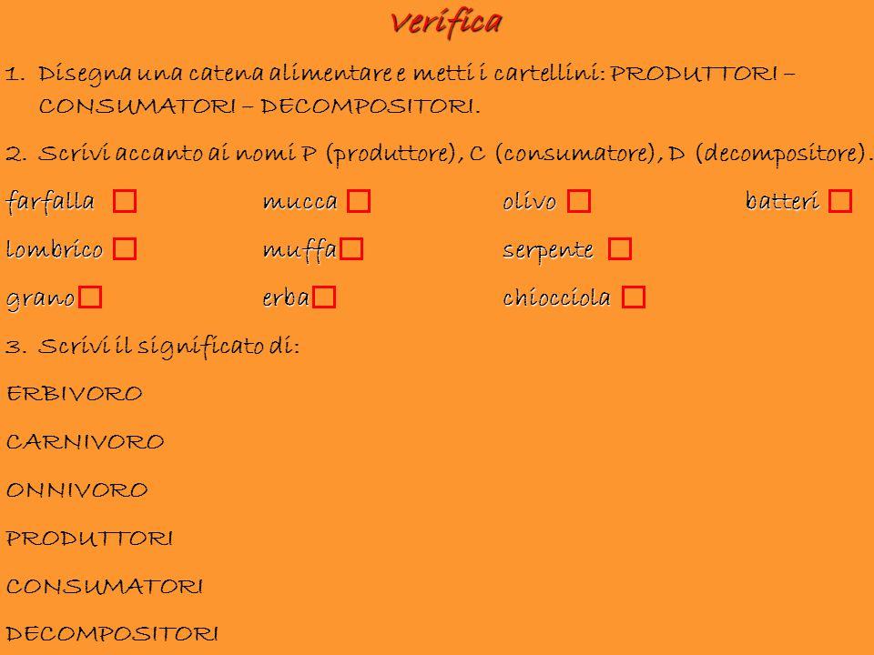 Verifica Disegna una catena alimentare e metti i cartellini: PRODUTTORI –CONSUMATORI – DECOMPOSITORI.