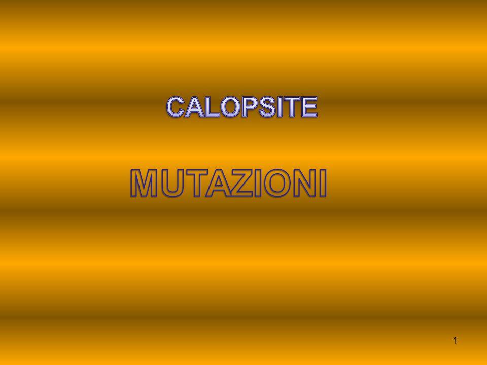 CALOPSITE MUTAZIONI