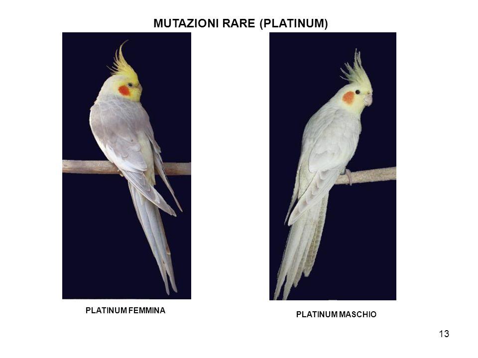 MUTAZIONI RARE (PLATINUM)