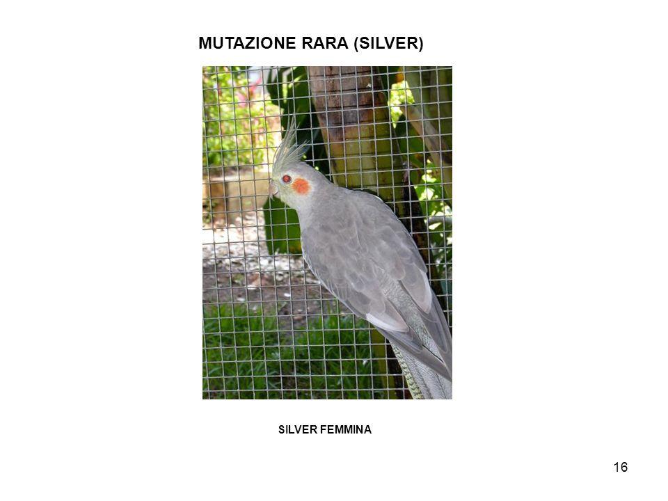 MUTAZIONE RARA (SILVER)
