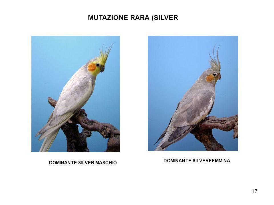 MUTAZIONE RARA (SILVER