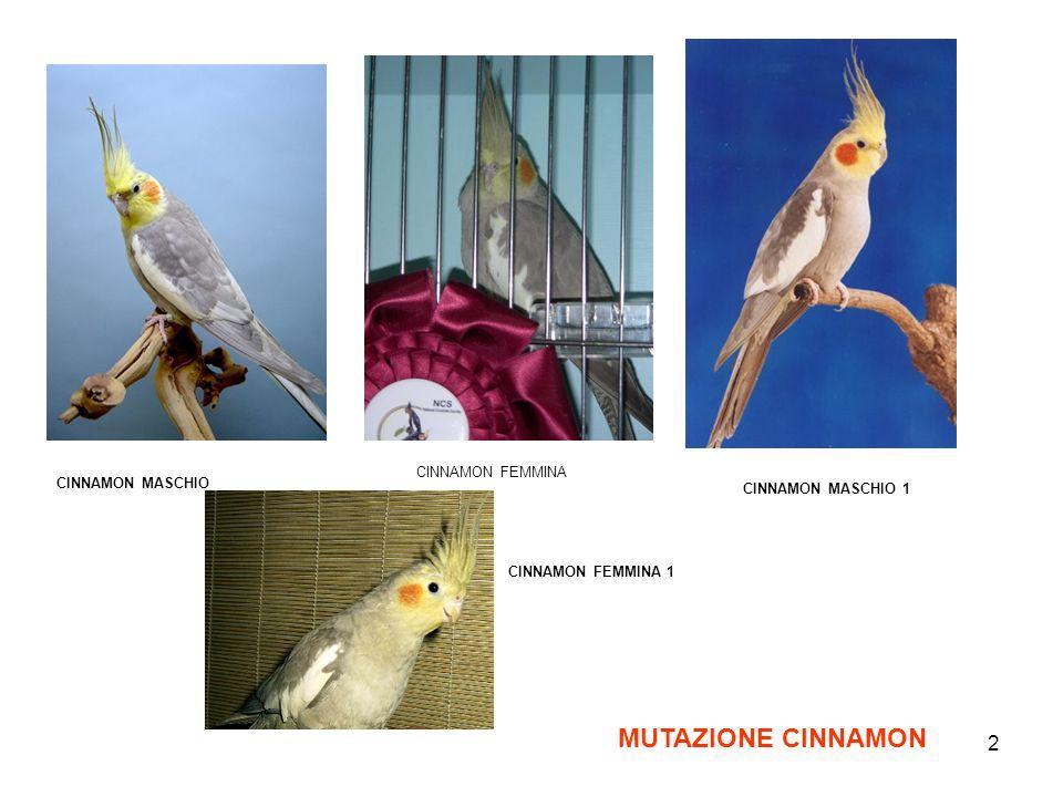 MUTAZIONE CINNAMON CINNAMON FEMMINA CINNAMON MASCHIO