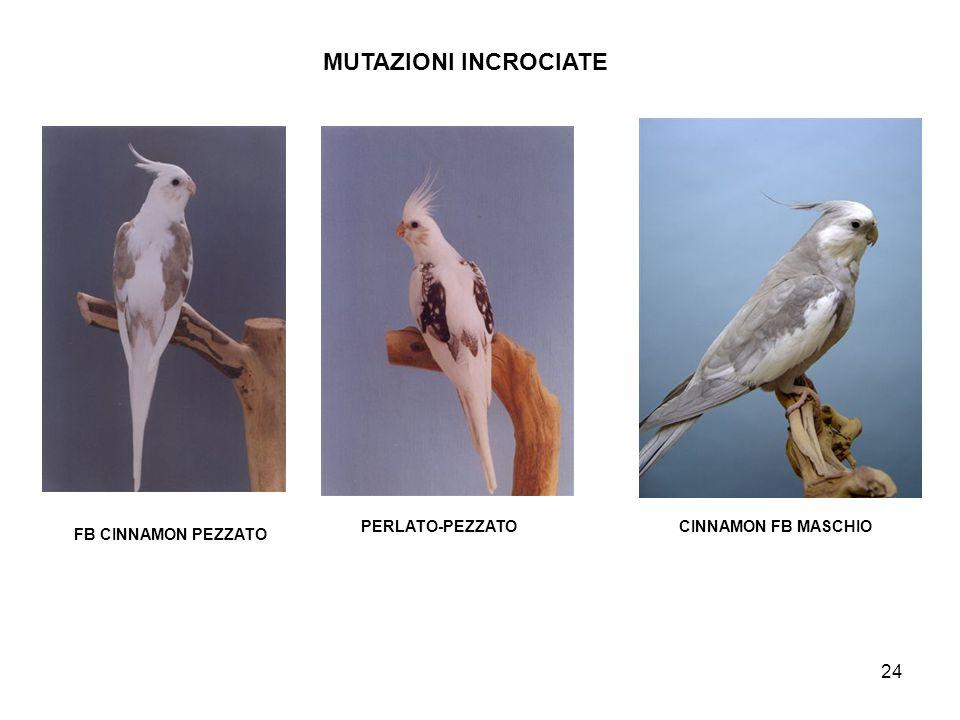 MUTAZIONI INCROCIATE PERLATO-PEZZATO CINNAMON FB MASCHIO