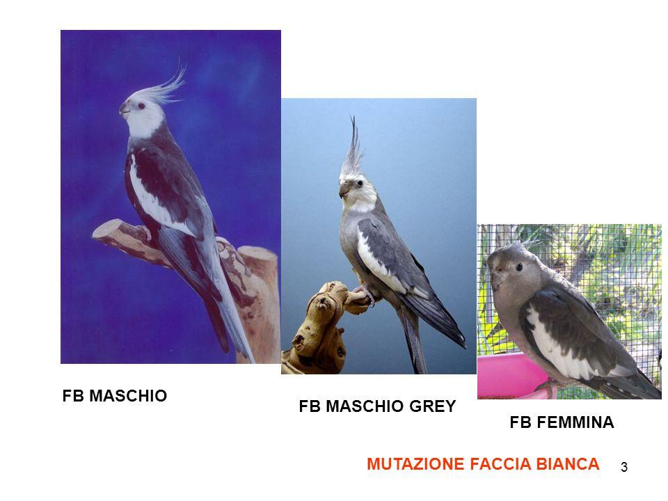 FB MASCHIO FB MASCHIO GREY FB FEMMINA MUTAZIONE FACCIA BIANCA