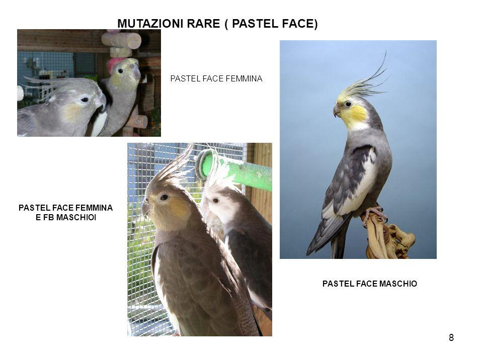 MUTAZIONI RARE ( PASTEL FACE)