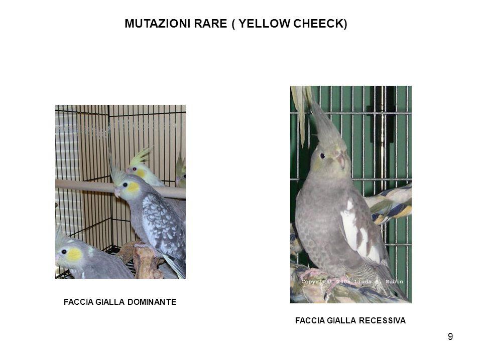 MUTAZIONI RARE ( YELLOW CHEECK)