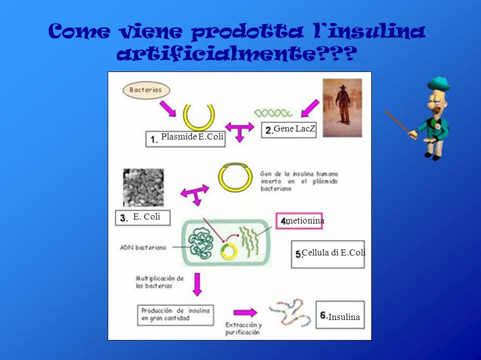 Come viene prodotta l'insulina artificialmente
