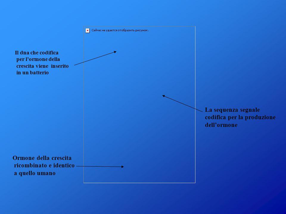 codifica per la produzione dell'ormone