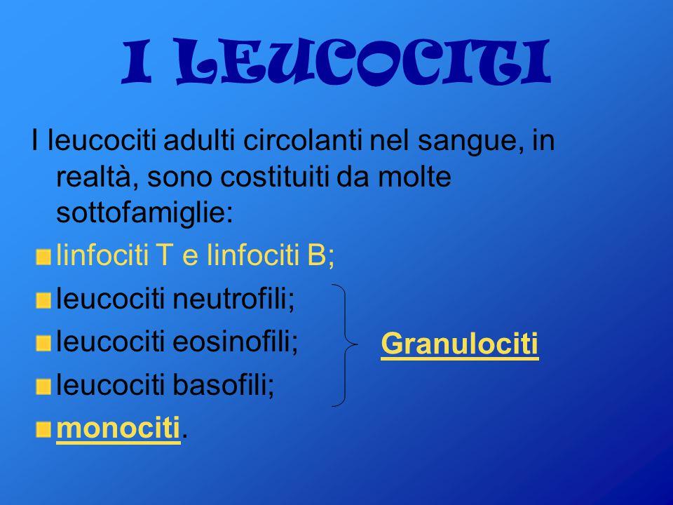 I LEUCOCITI I leucociti adulti circolanti nel sangue, in realtà, sono costituiti da molte sottofamiglie:
