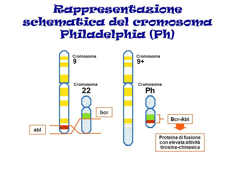 Rappresentazione schematica del cromosoma Philadelphia (Ph)