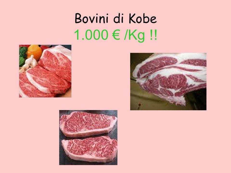 Bovini di Kobe 1.000 € /Kg !!