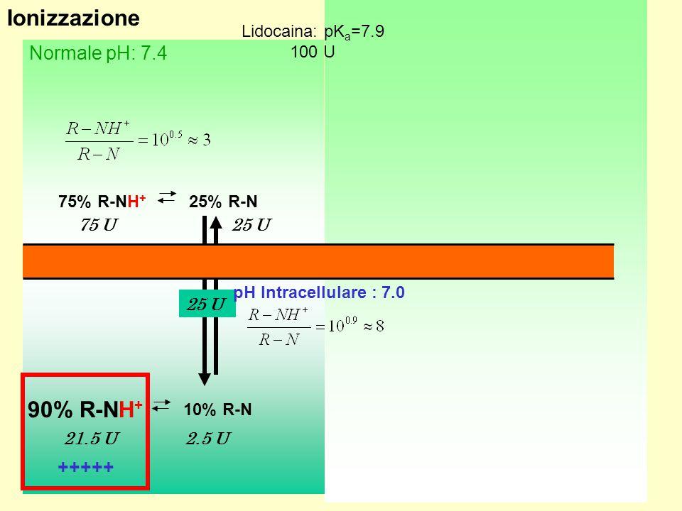 Ionizzazione 90% R-NH+ Infiammato: pH 6.5 Normale pH: 7.4 ---- +++++