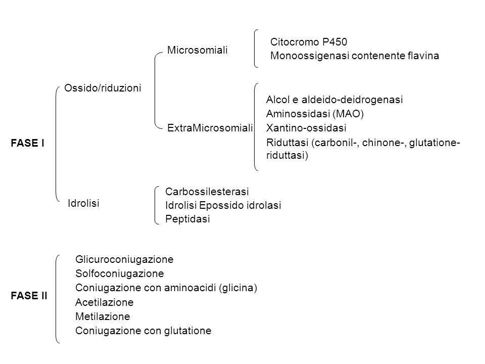 Citocromo P450 Monoossigenasi contenente flavina. Microsomiali. Ossido/riduzioni. Alcol e aldeido-deidrogenasi.