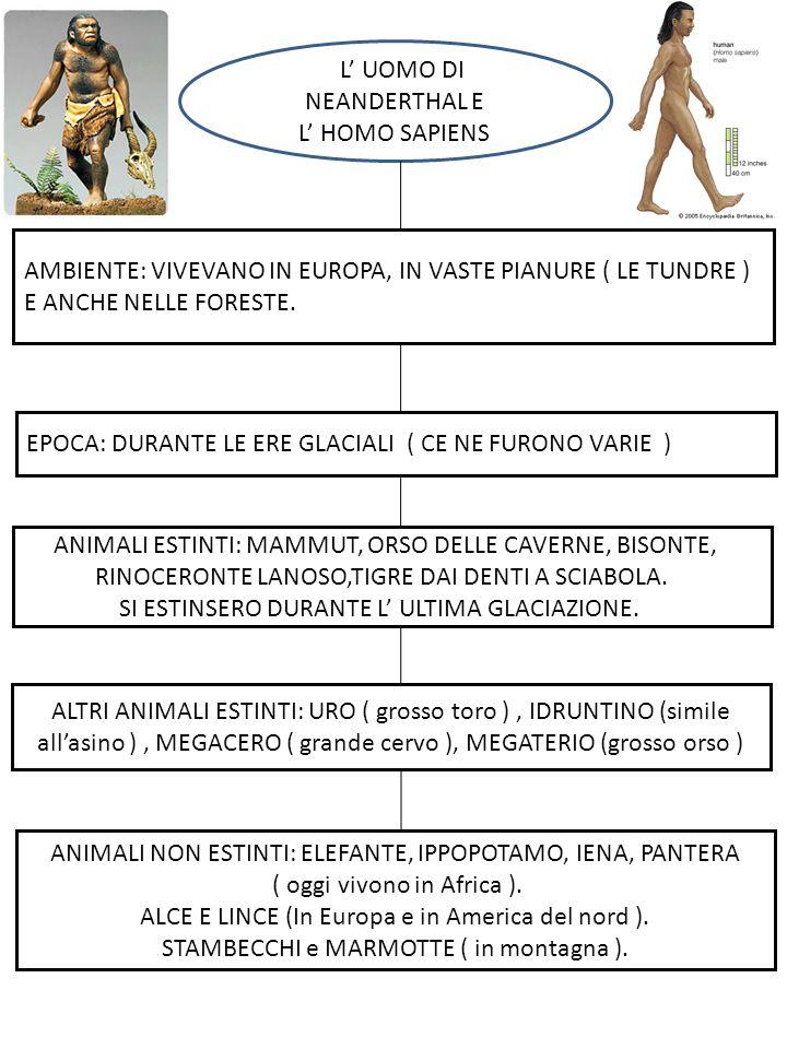L'L' UOMO DI NEANDERTHAL E L' HOMO SAPIENS