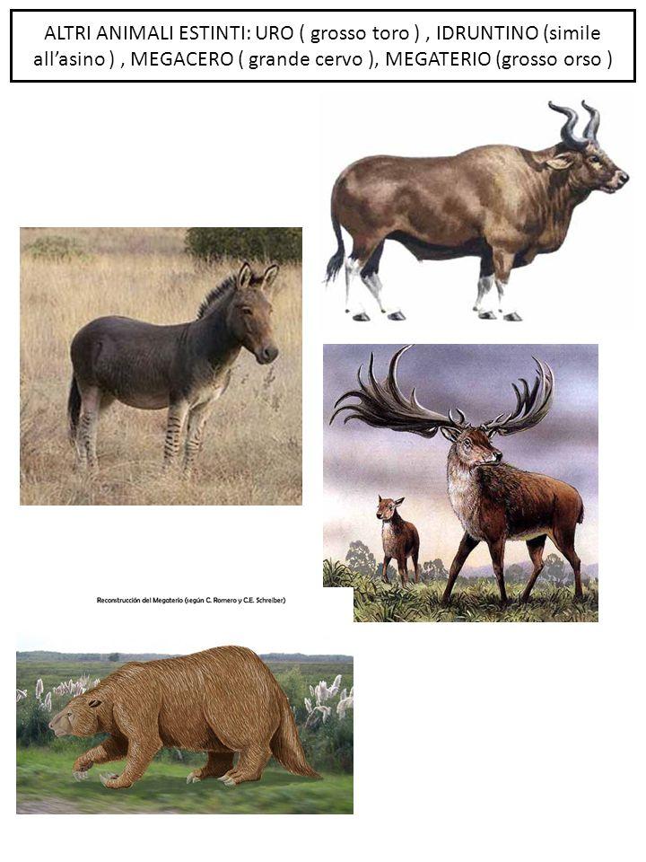 ALTRI ANIMALI ESTINTI: URO ( grosso toro ) , IDRUNTINO (simile all'asino ) , MEGACERO ( grande cervo ), MEGATERIO (grosso orso )