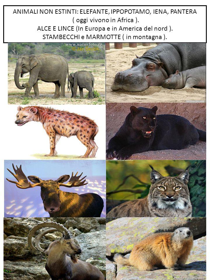 ANIMALI NON ESTINTI: ELEFANTE, IPPOPOTAMO, IENA, PANTERA