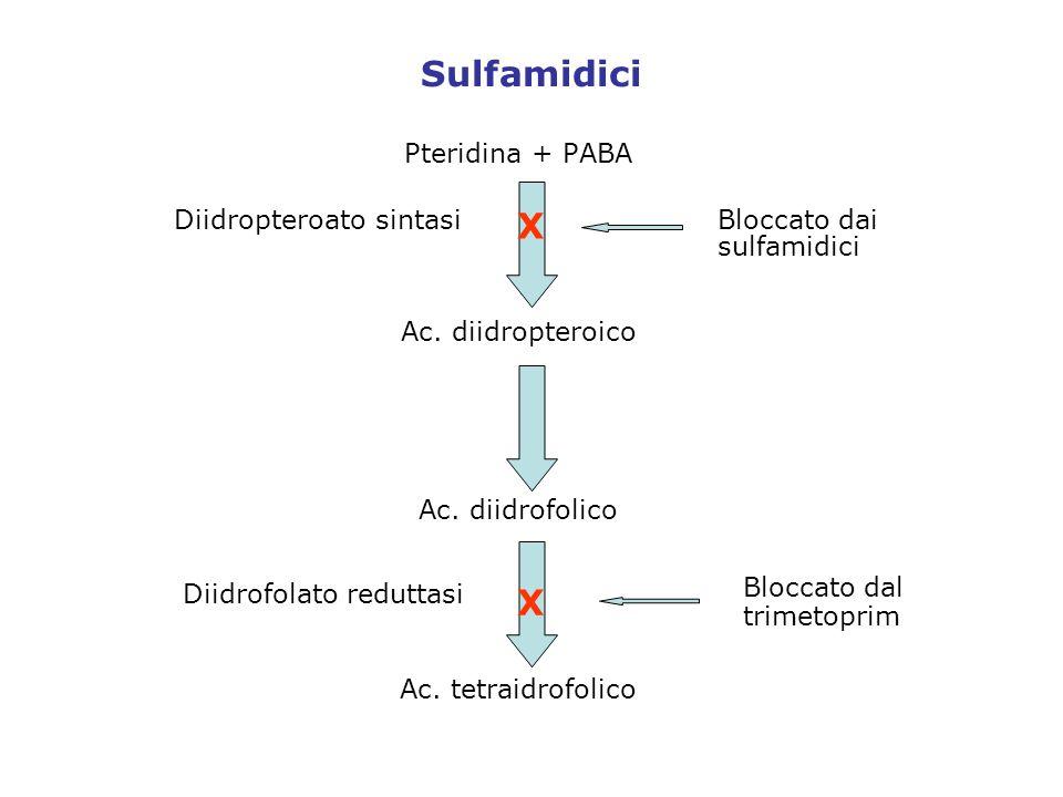 Sulfamidici X X Pteridina + PABA Ac. diidropteroico Ac. diidrofolico