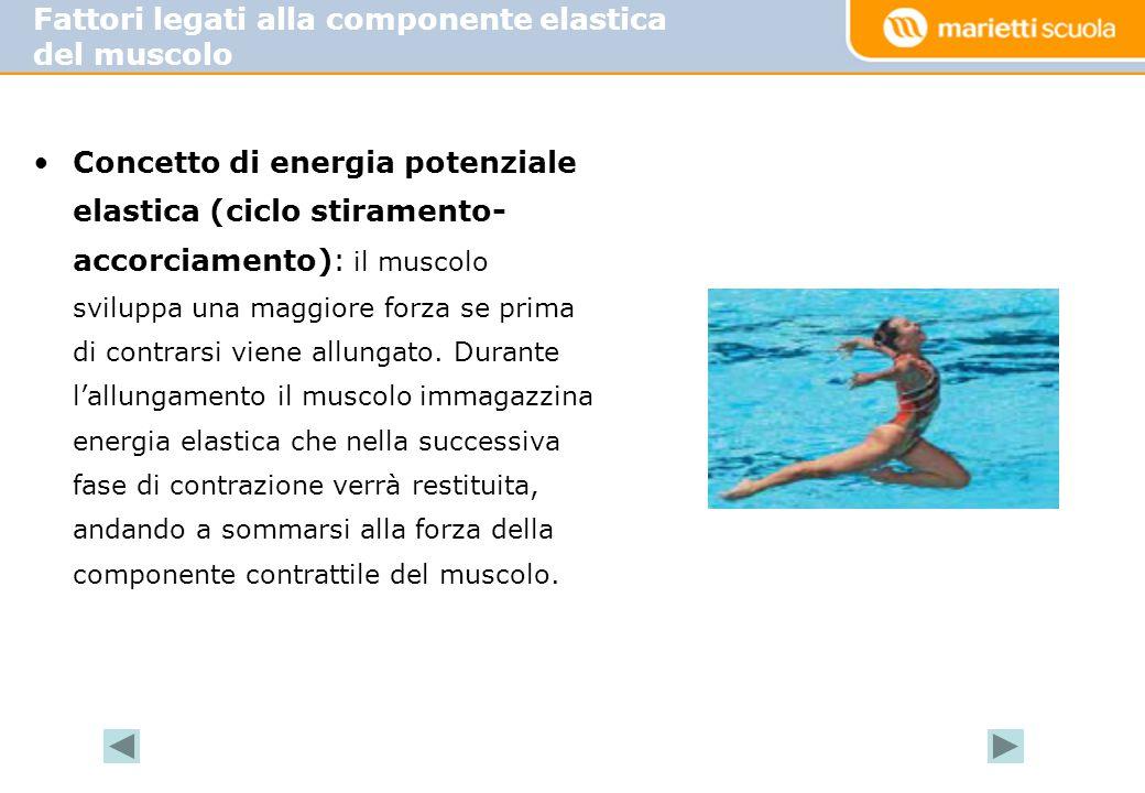 Fattori legati alla componente elastica del muscolo