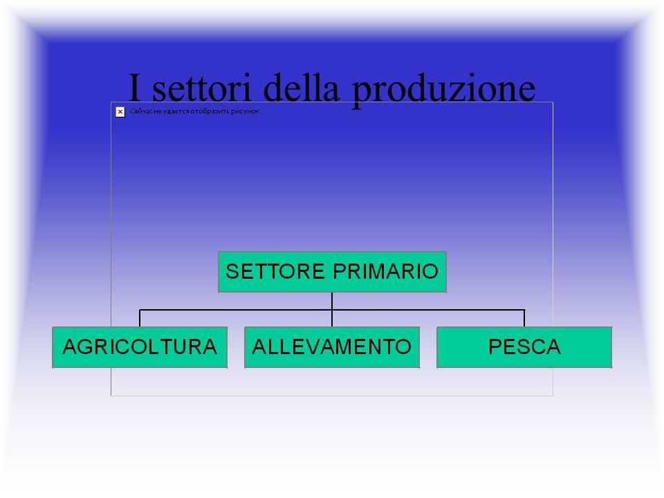 I settori della produzione