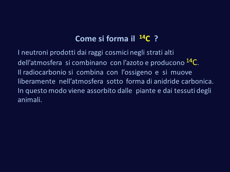 Come si forma il 14C I neutroni prodotti dai raggi cosmici negli strati alti dell'atmosfera si combinano con l'azoto e producono 14C.