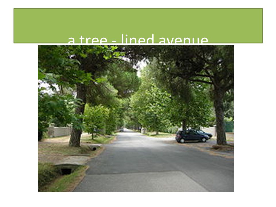 a tree - lined avenue