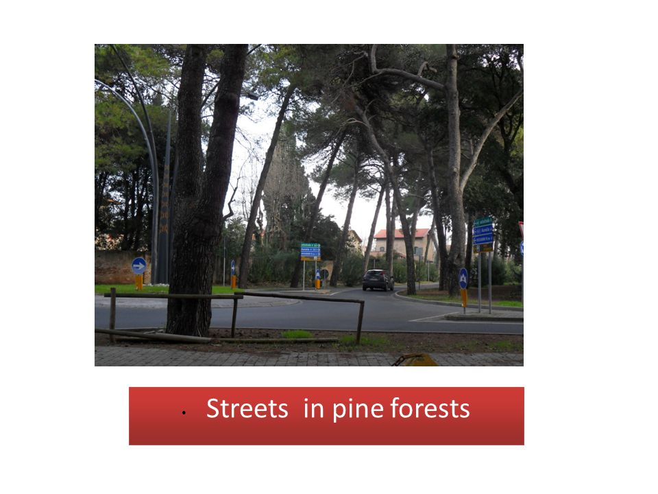 Streets in pine forests