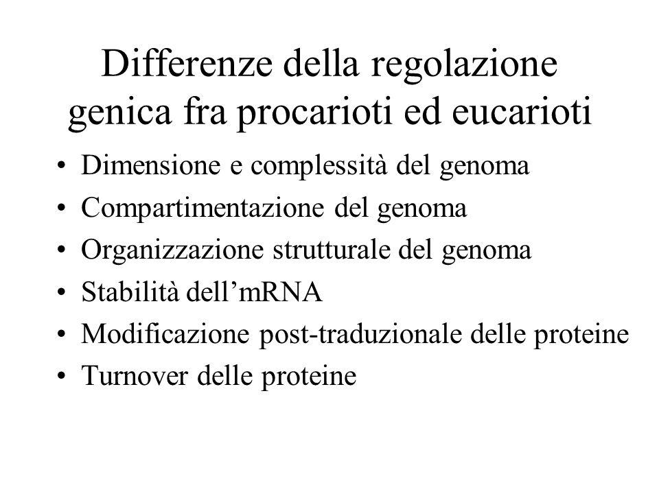 Differenze della regolazione genica fra procarioti ed eucarioti