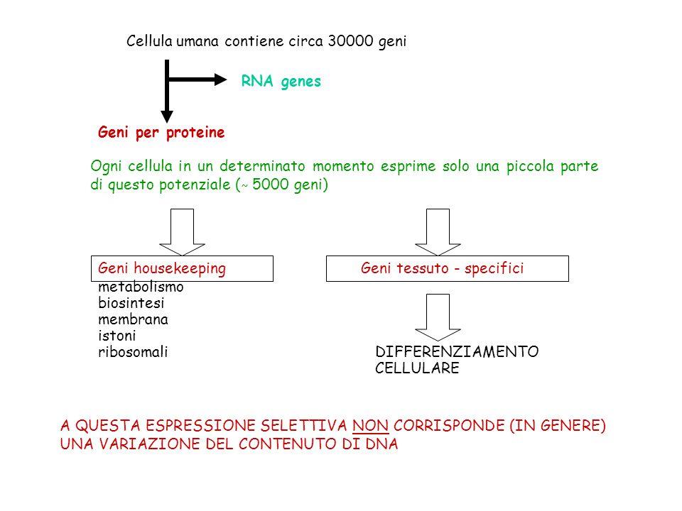 Cellula umana contiene circa 30000 geni