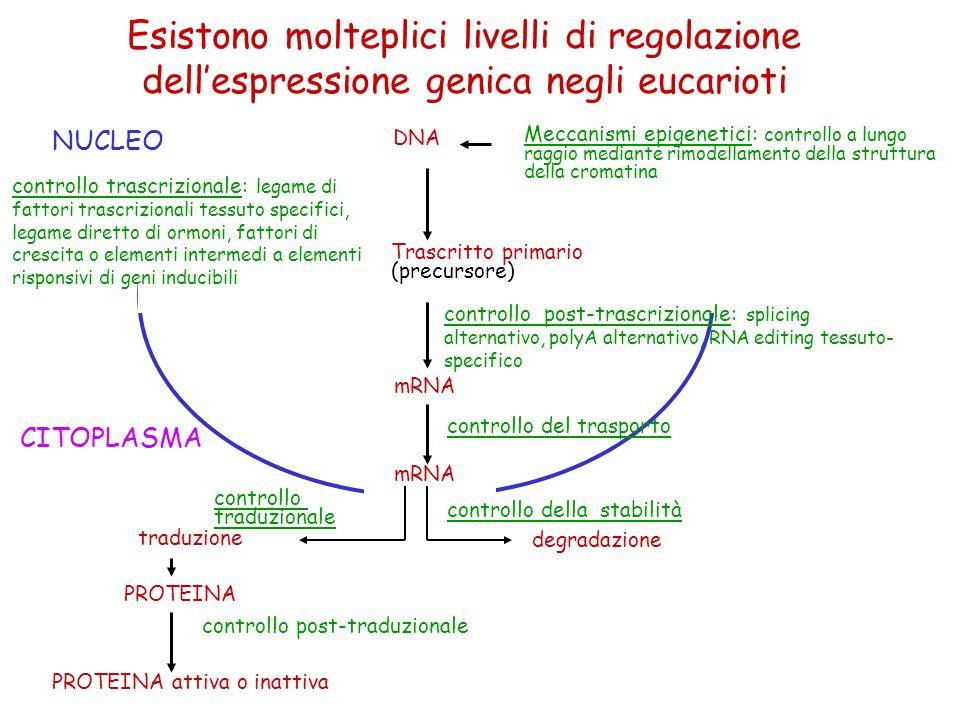 Esistono molteplici livelli di regolazione dell'espressione genica negli eucarioti