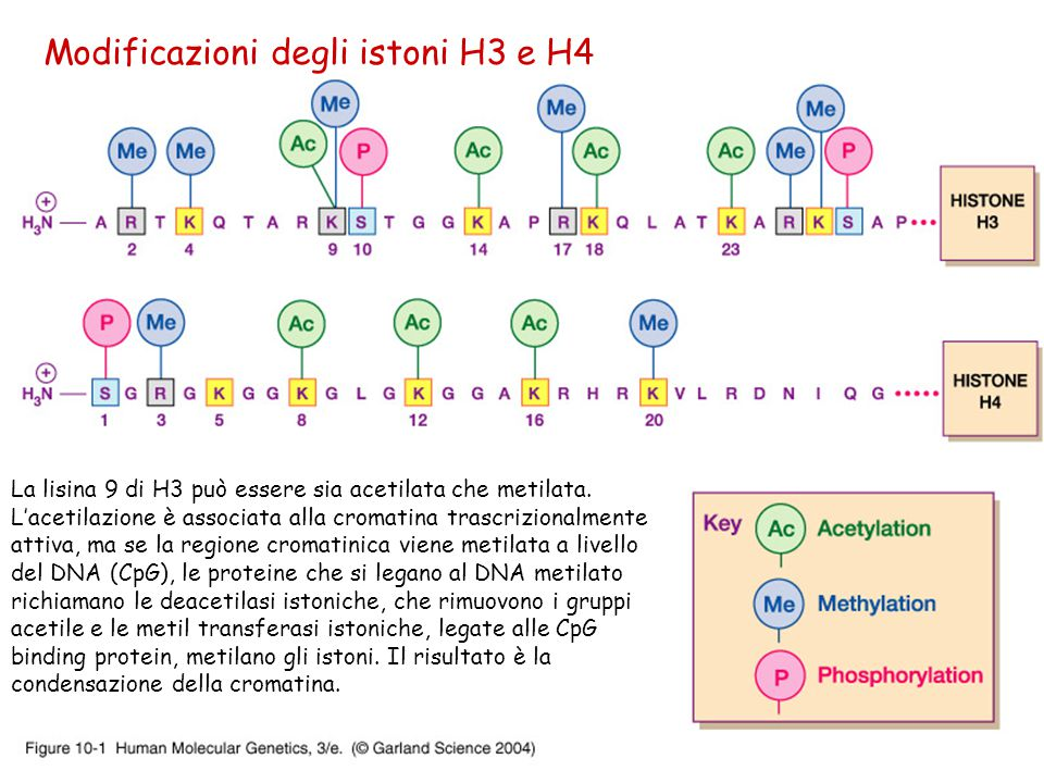 Modificazioni degli istoni H3 e H4