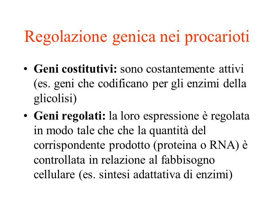 Regolazione genica nei procarioti