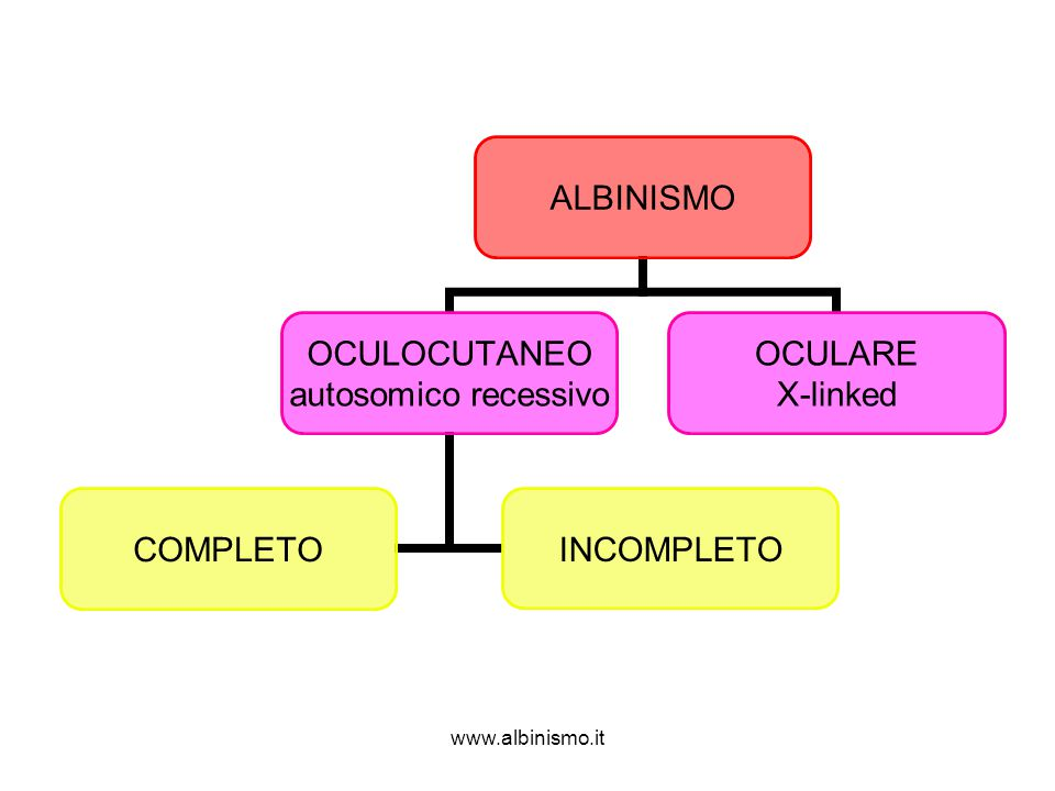 www.albinismo.it