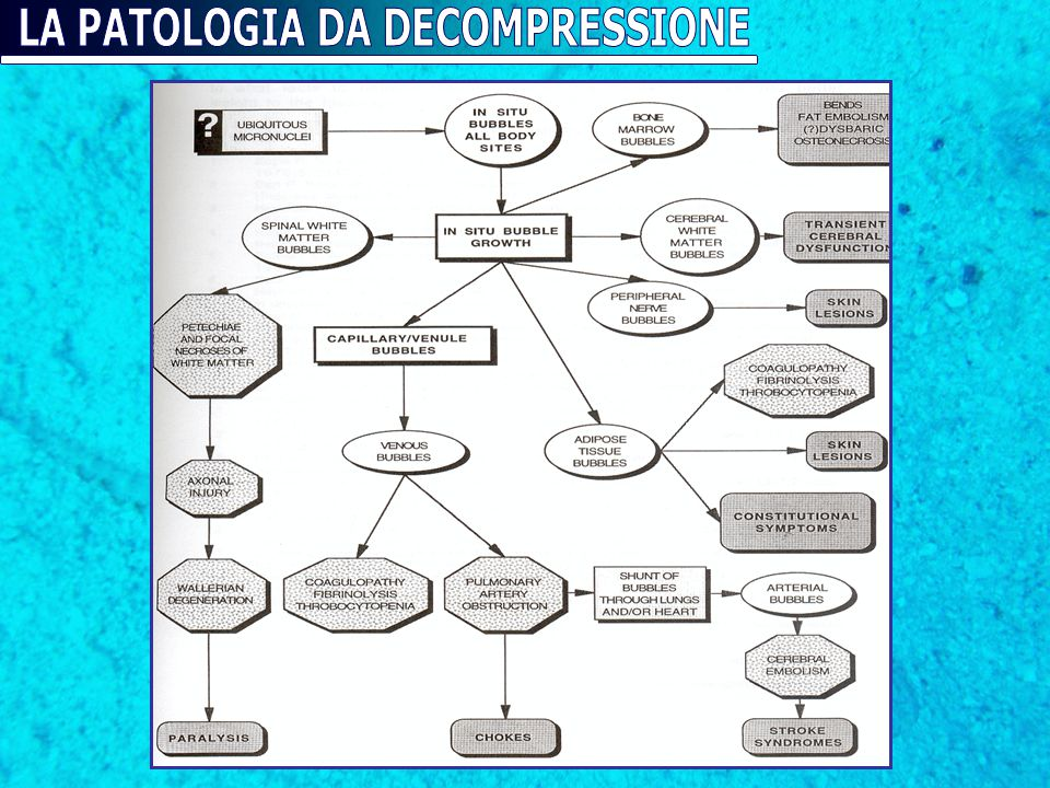LA PATOLOGIA DA DECOMPRESSIONE