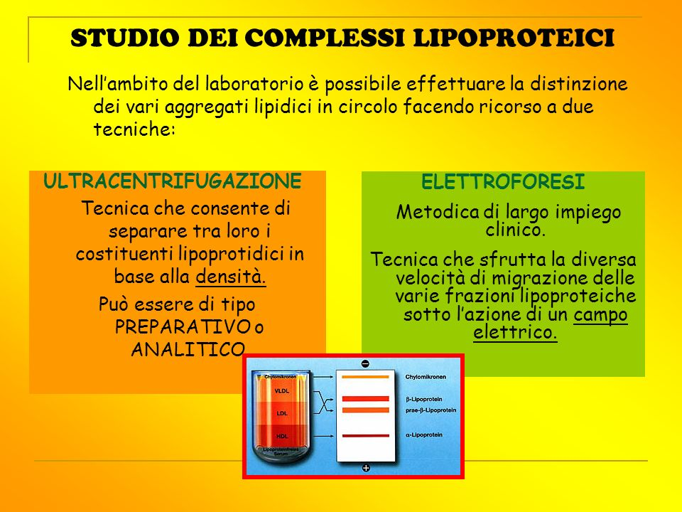 STUDIO DEI COMPLESSI LIPOPROTEICI